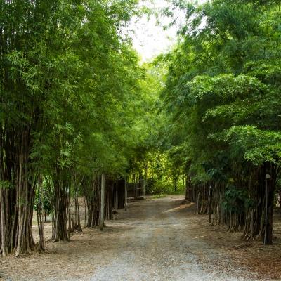 Väg genom bambu
