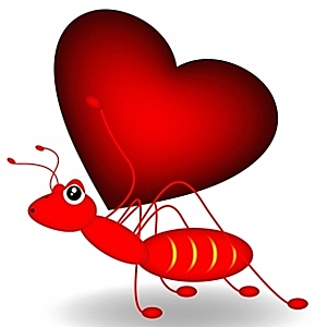 Ant and heart